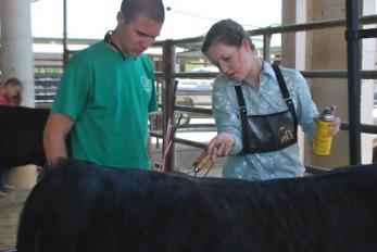 4-H County Livestock Show